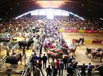 Mercado de ganado lleno de gente